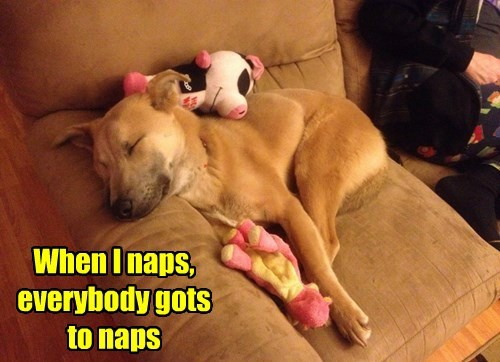 dogs,stuffed animals,nap