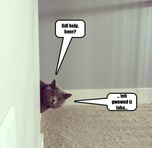 lidl help, heer?