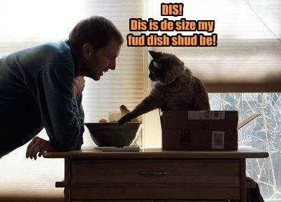 DIS!   Dis is de size my fud dish shud be!