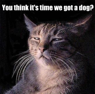 dogs,nope,stop it,Cats,stupid