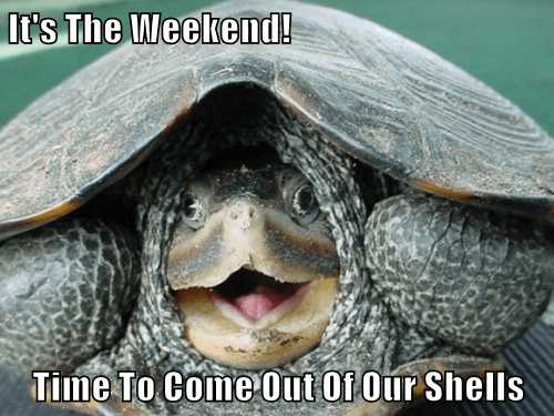It's The Weekend!  Time To Come Out Of Our Shells