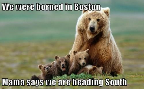 We were borned in Boston  Mama says we are heading South
