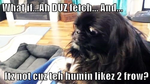 What if...Ah DUZ fetch... And...  Itz not cuz teh humin likez 2 frow?