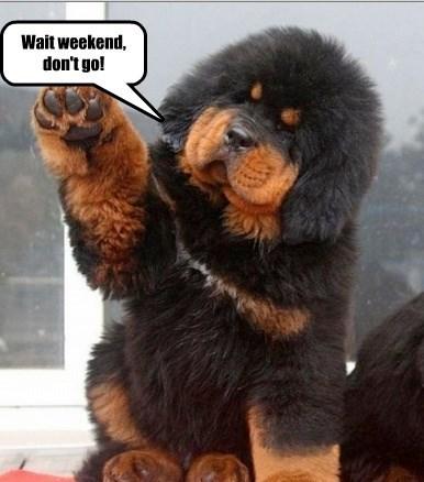 Wait weekend, don't go!