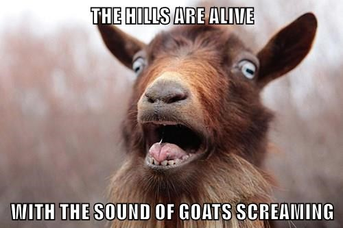 THE HILLS ARE ALIVE  WITH THE SOUND OF GOATS SCREAMING