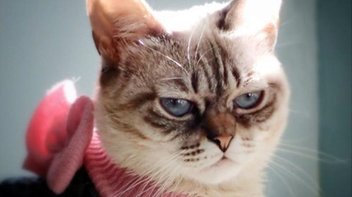 Grumpy Cat,the internets,Cats