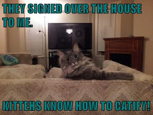 THEY SIGNED OVER THE HOUSE TO ME.     KITTEHS KNOW HOW TO CATIFY!