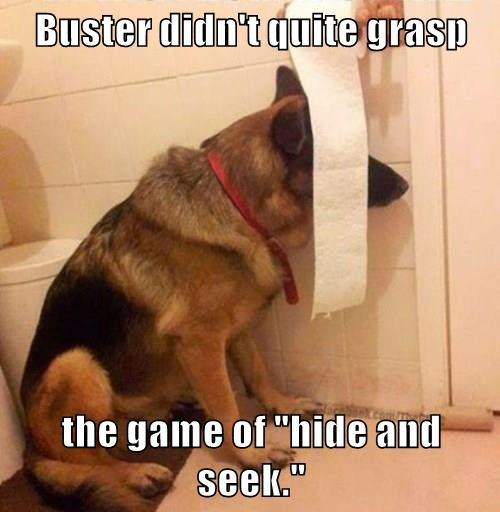 "Buster didn't quite grasp  the game of ""hide and seek."""