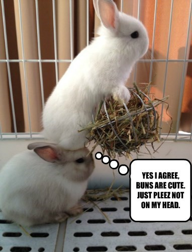 YES I AGREE, BUNS ARE CUTE. JUST PLEEZ NOT ON MY HEAD.