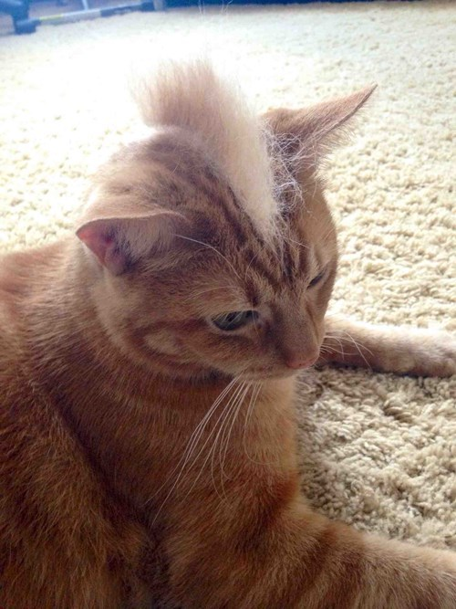 I Can Has Mohawk?