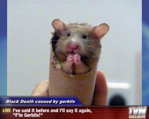 """Black Death caused by gerbils - I've said it before and I'll say it again, """"F'in Gerbils!"""""""