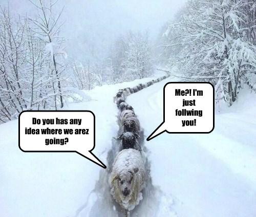 goat,follow,sheep,lost