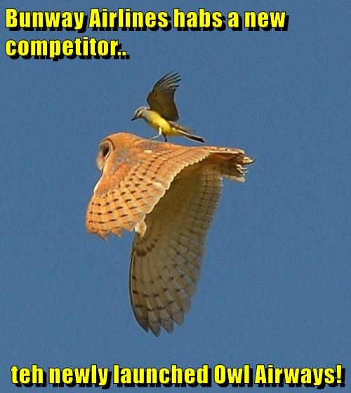 Bunway Airlines habs a new competitor..  teh newly launched Owl Airways!