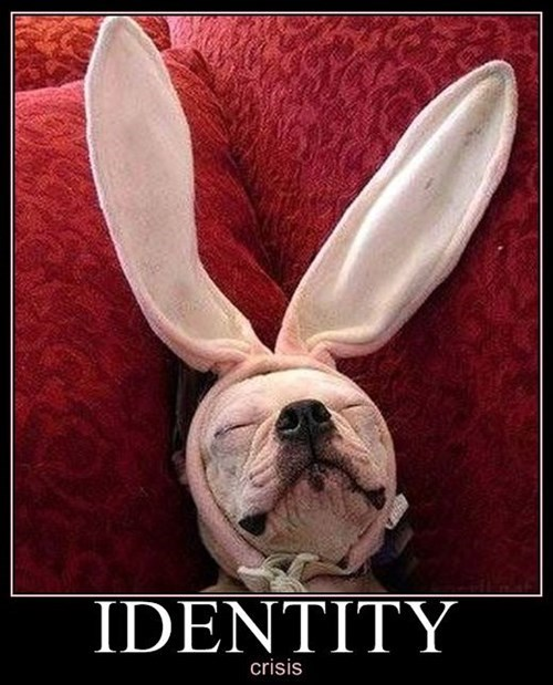 The Dog Bunny