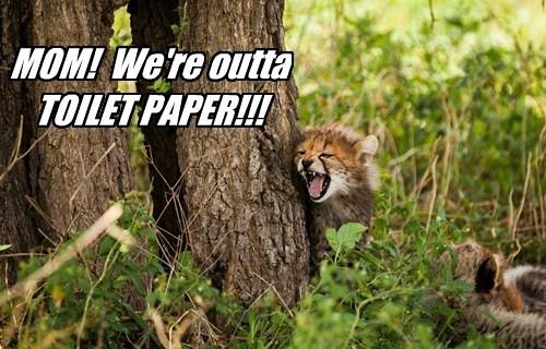 cheetah,captions,funny