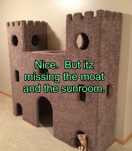 tabby,cat tree,castle,kitten,spoiled,Cats