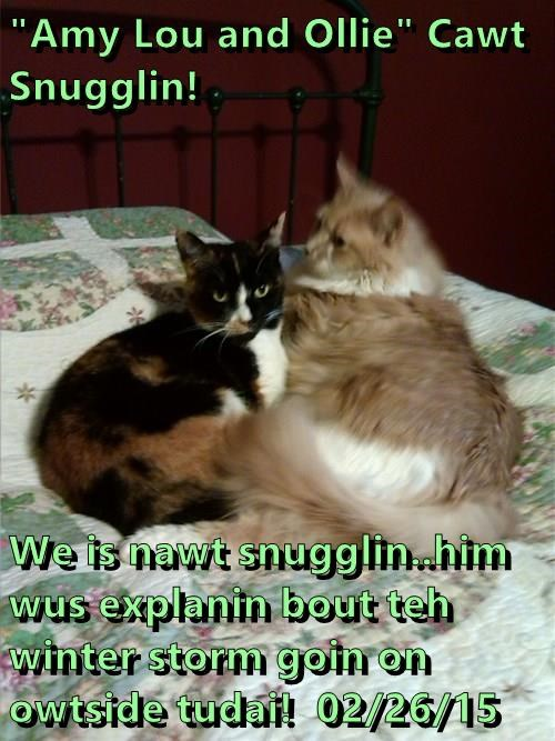 """Amy Lou and Ollie"" Cawt Snugglin!  We is nawt snugglin..him wus explanin bout teh winter storm goin on owtside tudai!  02/26/15"