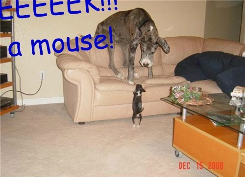 EEEEEK!!! a mouse!