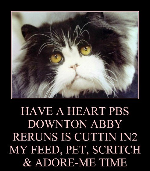 HAVE A HEART PBS DOWNTON ABBY RERUNS IS CUTTIN IN2 MY FEED, PET, SCRITCH & ADORE-ME TIME