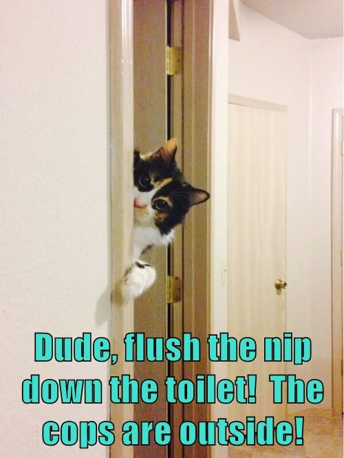 Dude, flush the nip down the toilet!  The cops are outside!