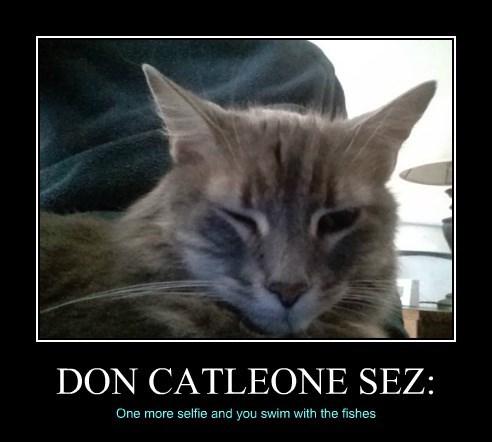 DON CATLEONE SEZ: