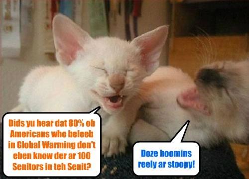 Kitties habing a laff at teh eggspense ob hoomins..