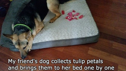 aww,dogs,german shepherd,flowers