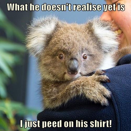 baby animals,pee,koala,squee