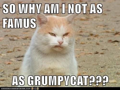 SO WHY AM I NOT AS FAMUS  AS GRUMPYCAT???