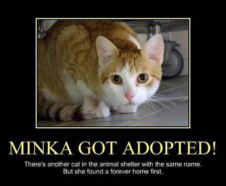 MINKA GOT ADOPTED!