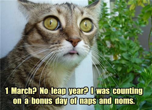 1  March?  No  leap  year?  I  was  counting  on  a  bonus  day  of  naps  and  noms.