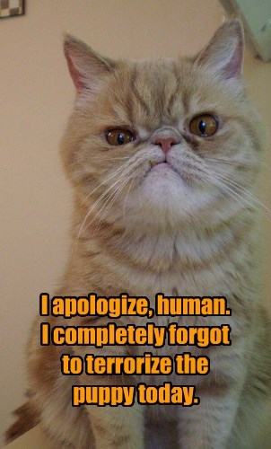 I apologize, human. I completely forgot to terrorize the puppy today.