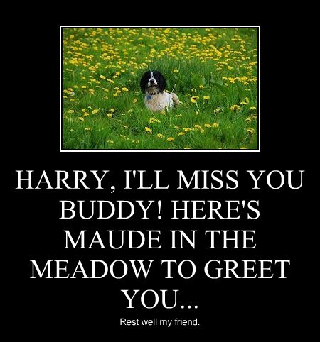 HARRY, I'LL MISS YOU BUDDY! HERE'S MAUDE IN THE MEADOW TO GREET YOU...