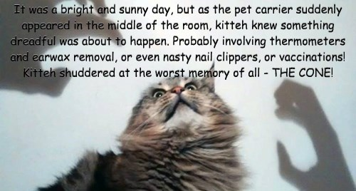 It was a bright and sunny day, but as the pet carrier suddenly appeared in the middle of the room, kitteh knew something dreadful was about to happen. Probably involving thermometers and earwax removal, or even nasty nail clippers, or vaccinations! Kitteh