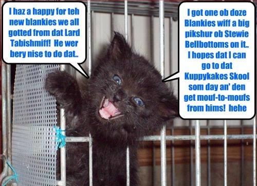 St. Francis Animal Shelter kittie Lucy eggspresses her delite for teh new Sylvia's Sleepytime Fleece Blankies dat teh shelter received..