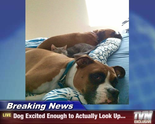 Breaking News - Dog Excited Enough to Actually Look Up...