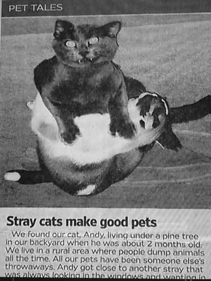 Derpy Cats Make Amazing Pets