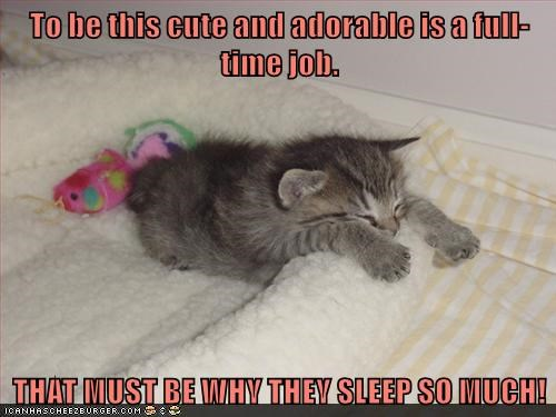 To be this cute and adorable is a full-time job.  THAT MUST BE WHY THEY SLEEP SO MUCH!