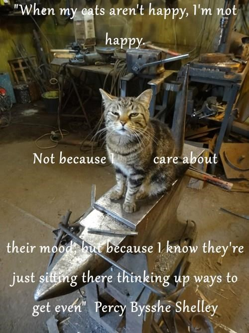 """""""When my cats aren't happy, I'm not happy. Not because I          care about  their mood, but because I know they're just sitting there thinking up ways to get even""""  Percy Bysshe Shelley"""