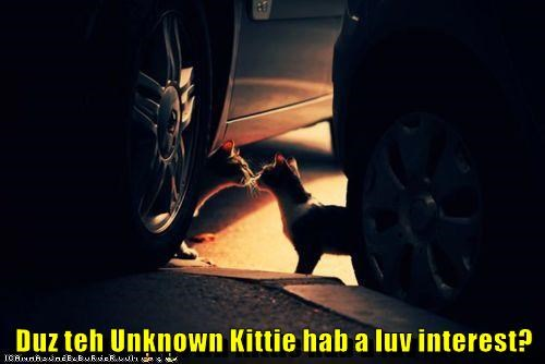 Duz teh Unknown Kittie hab a luv interest?