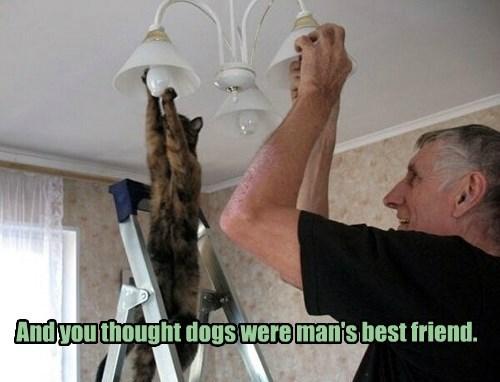 BFFs,light bulb,Cats