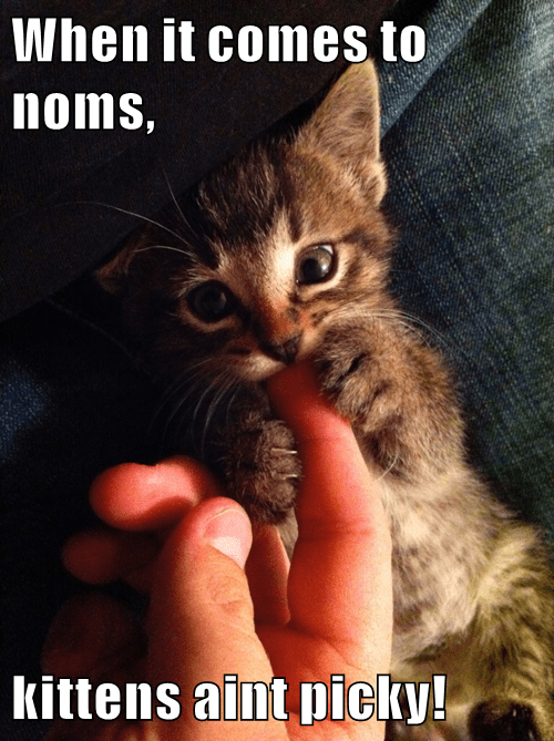 When it comes to noms,  kittens aint picky!