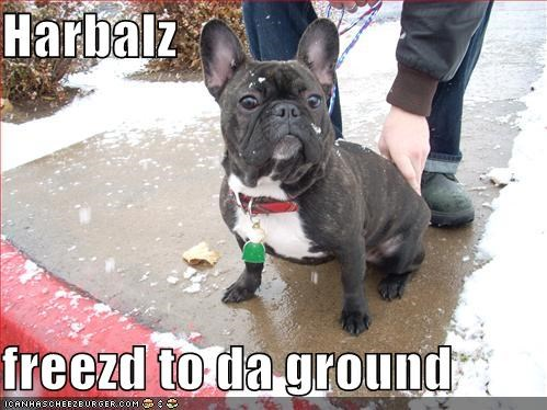Harbalz  freezd to da ground