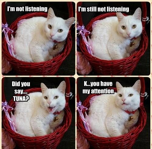 basket,Cats,ceiling cat,tuna,if i fits i sits