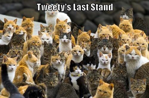 Battle,doomed,tweety,bird,Cats