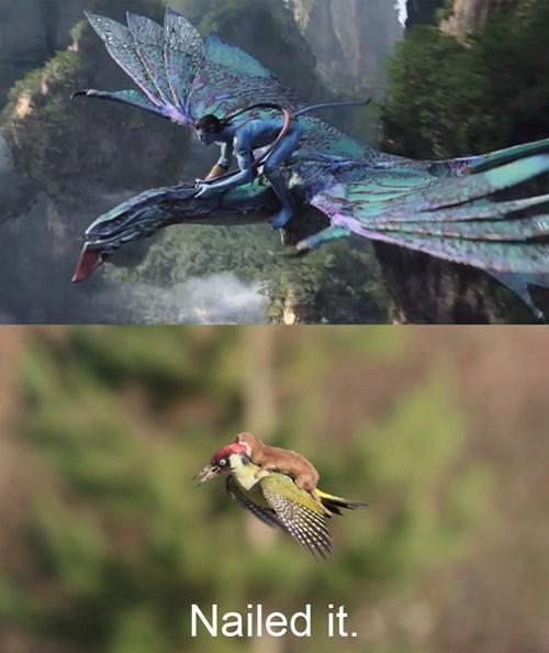 Avatar,Nailed It