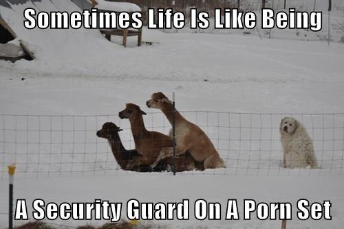 llama,dogs,life,pron