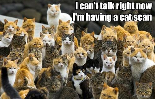 Staring,puns,glaring,Cats,clowder