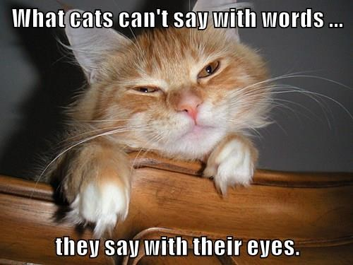 What cats can't say with words ...  they say with their eyes.