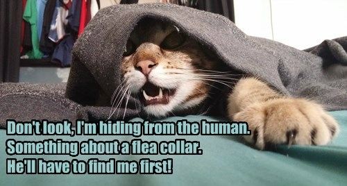 Don't look, I'm hiding from the human. Something about a flea collar. He'll have to find me first!